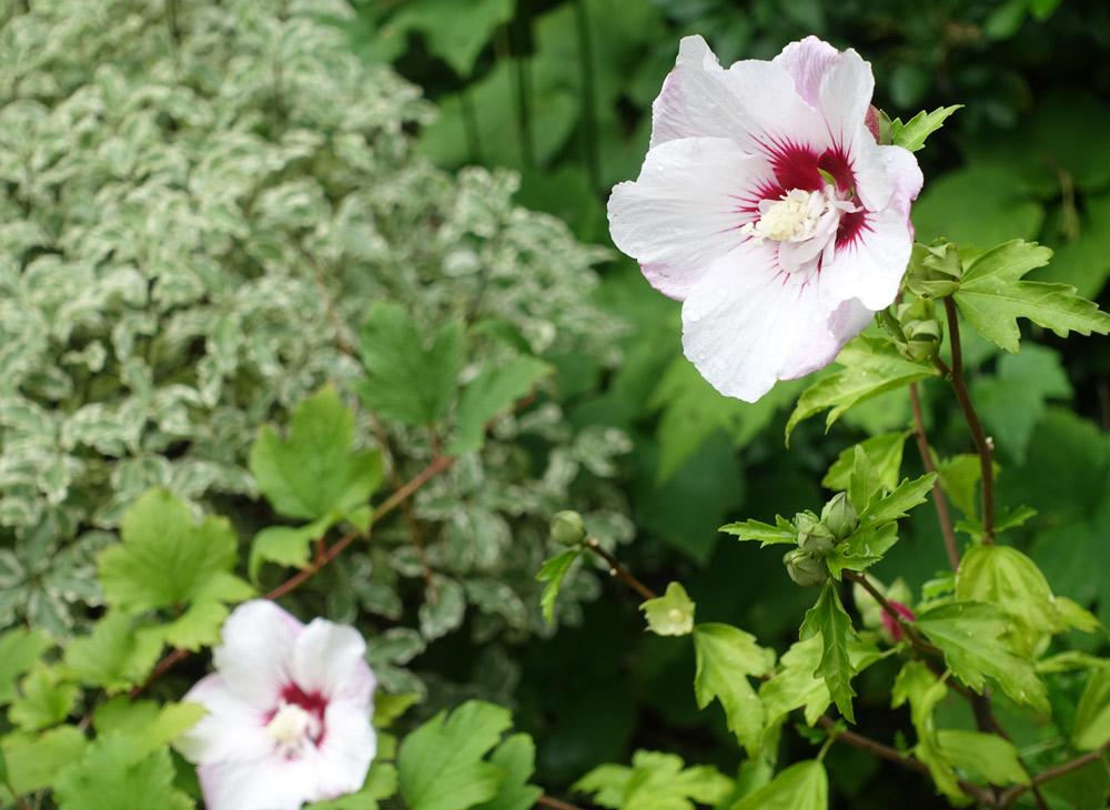 garden consultancy - Garden Design Services